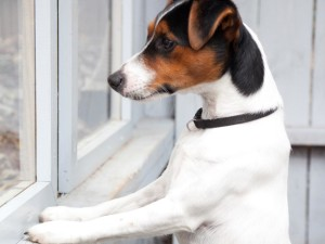 DIY, Do It Yourself, Pet Projects, Peek-A-Boo Window, Fence, For Dogs