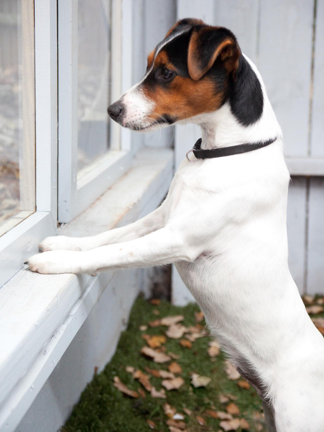 DIY - Peek-A-Boo Window in Fence for Dogs, Do It Yourself At Home