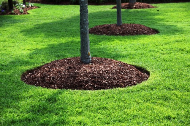 DIY, How To Apply Mulch, Infographic, Yard, Garden, Flower Bed, Do It Yourself